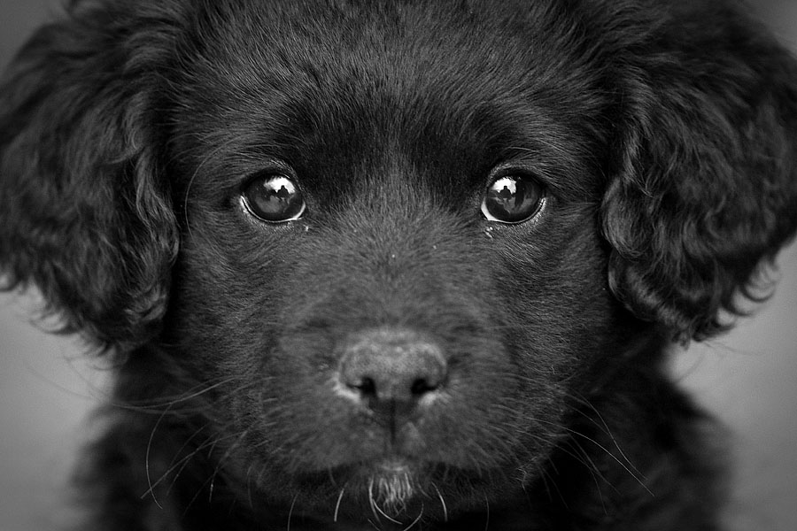 cute dog bw