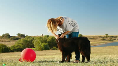 stock-footage-young-woman-training-newfoundland-dog-outdoor