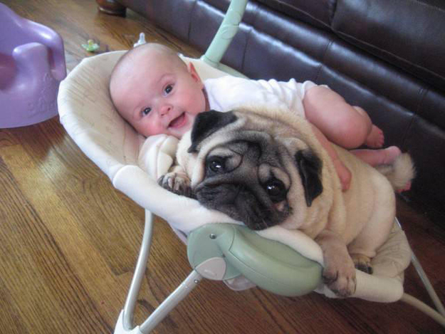 baby and chubby dog