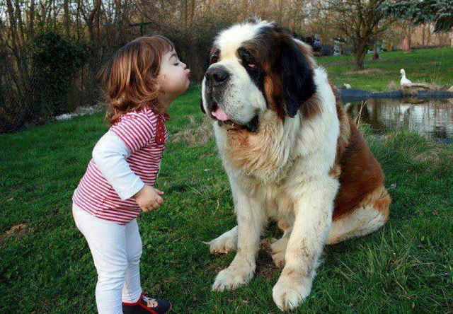 baby and dog kiss