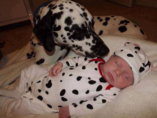dalmation and baby