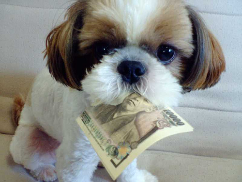 dog-with-money