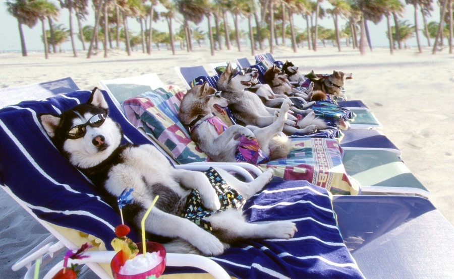 sunbathing_dogs