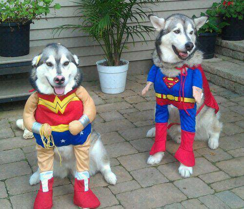 superhero-dogs