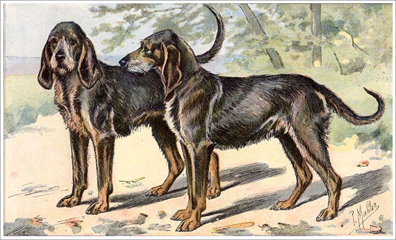 Extinct dog breeds - Gublog | Gudog UK blog