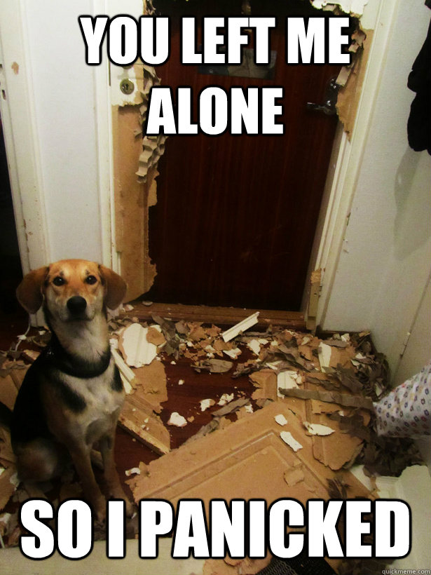 think again when leaving your dog home alone why not try