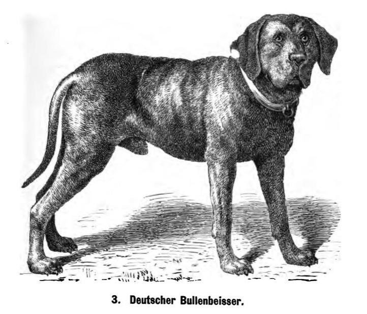 Deutscher_Bullenbeisser_1889_Friedrich