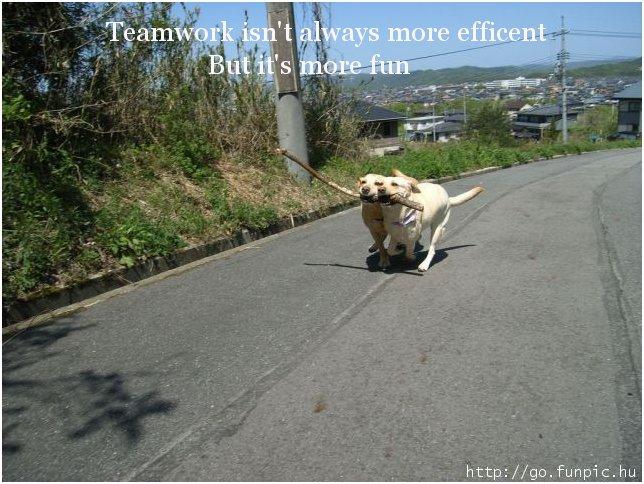 DogTeamwork