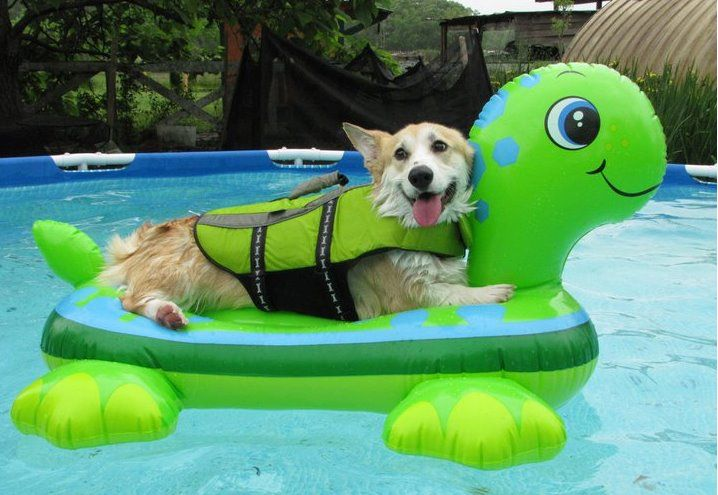 dog-in-pool