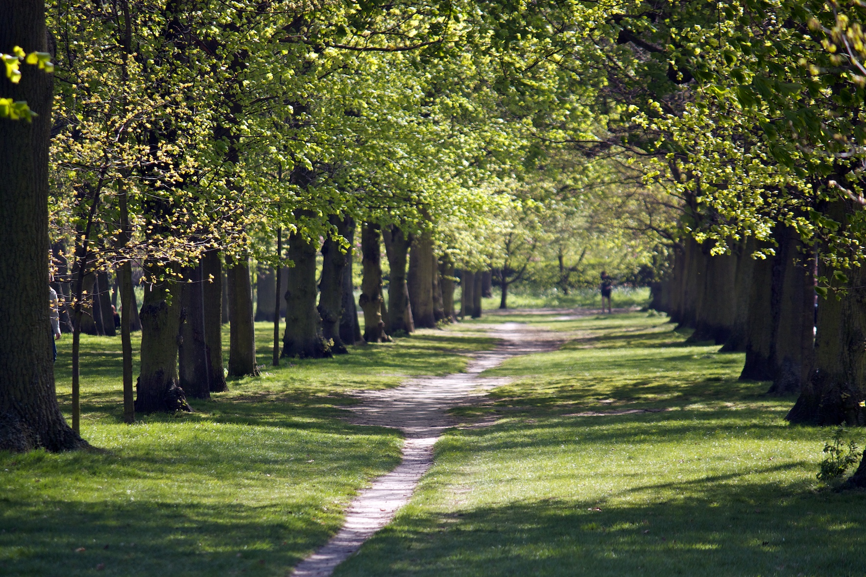 footpath-in-regents-park