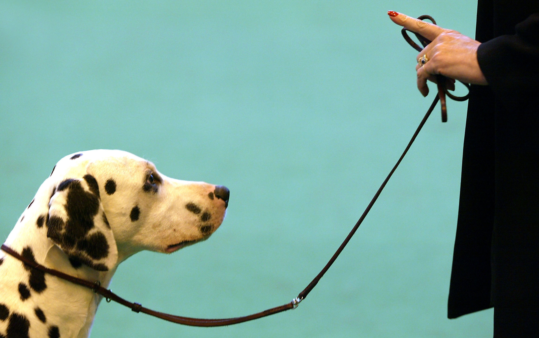 basic canine education