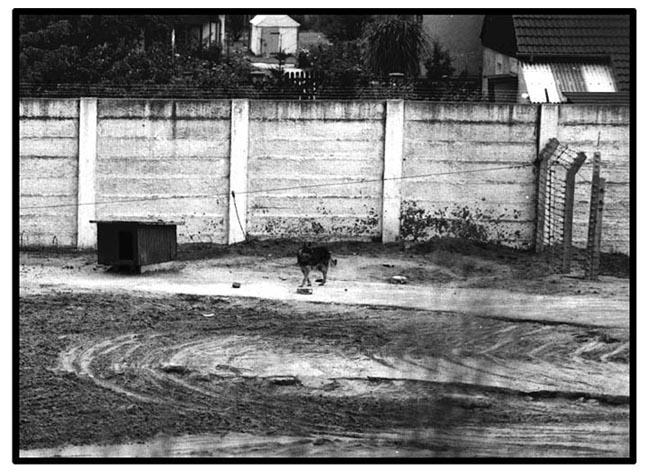 Perros-del-Muro