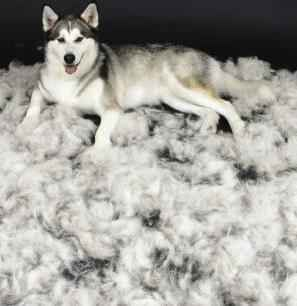 dog-shedding