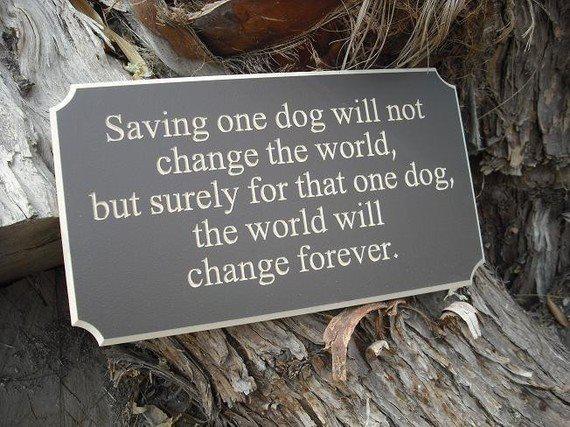 saving-dog-pic-off-facebook