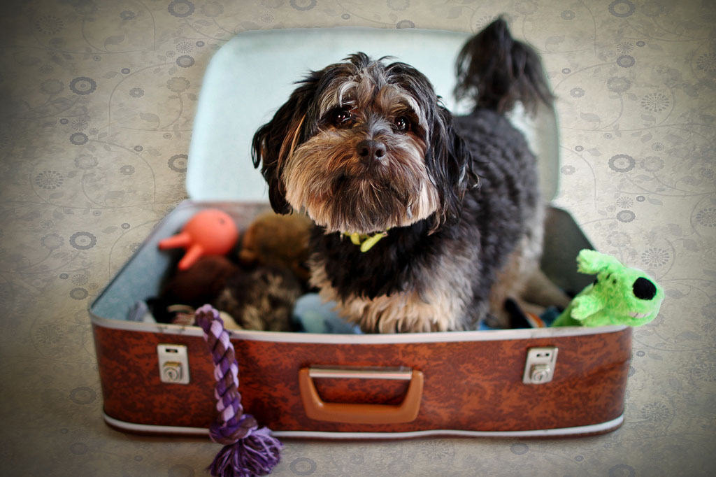 Packing-suitcase-dog