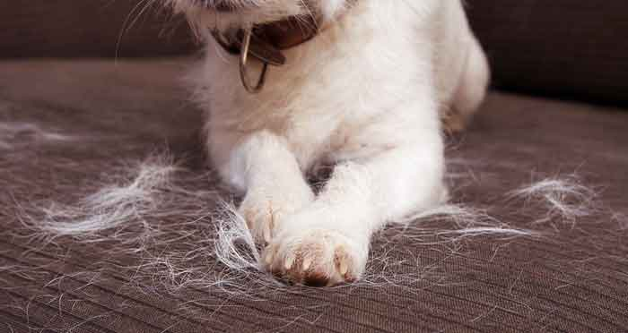 dog shedding moulting