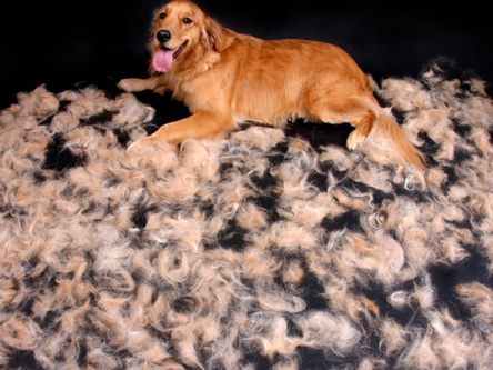 dogshedding1