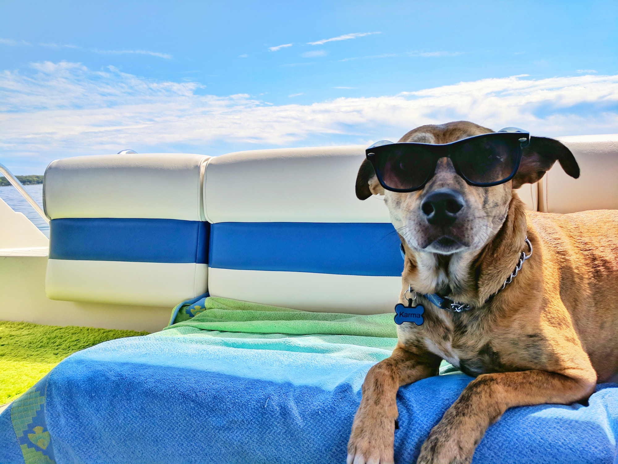 Dangerous products for dogs - Gublog | Gudog UK blog