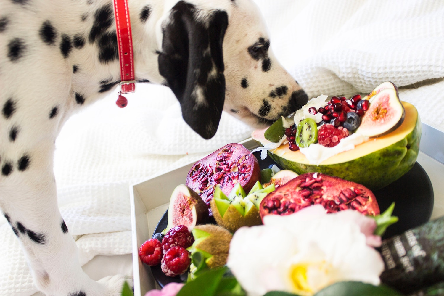 Healthy fruit and vegetables for your dog