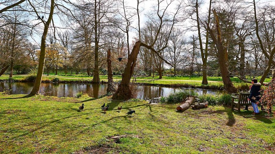 Bushy Park West London Dog Walk