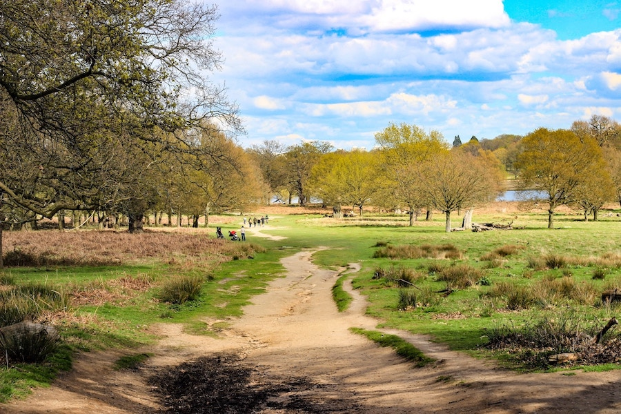Richmond Park West London Dog Walk