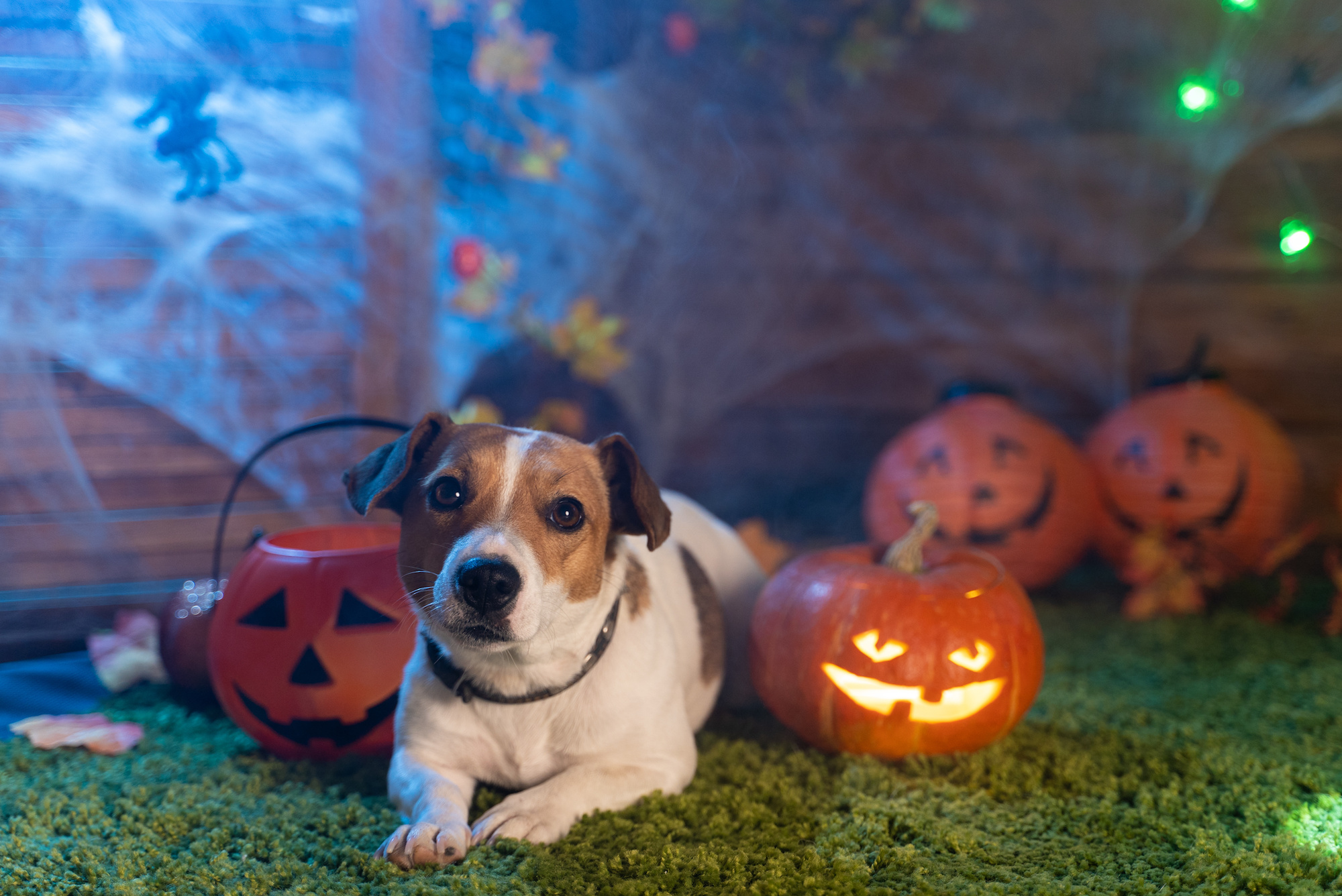 Keep your dog happy and safe this Halloween