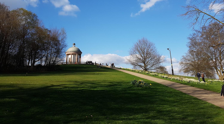 Gudog top dog walk Heaton Park in Manchester