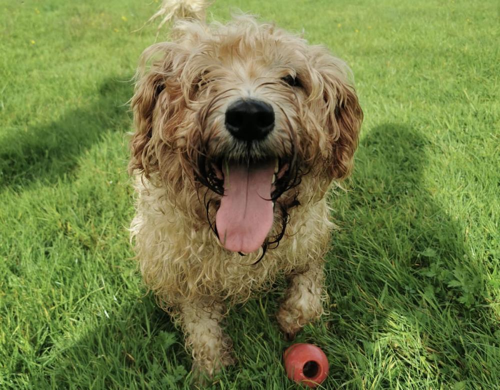 top 9 indestructible dog toys
