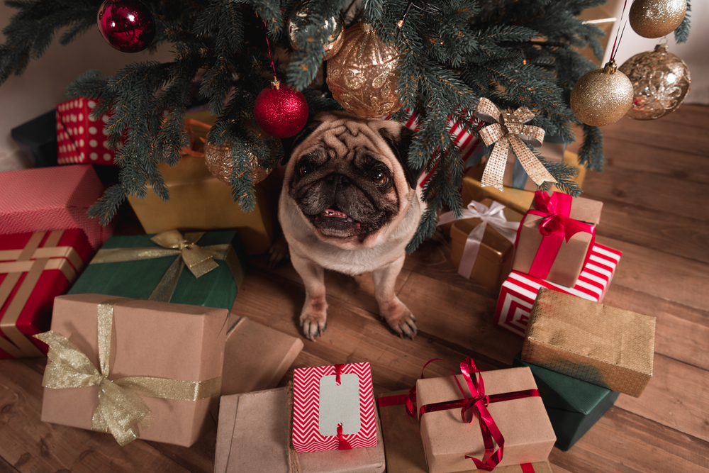 christmas presents for your dog