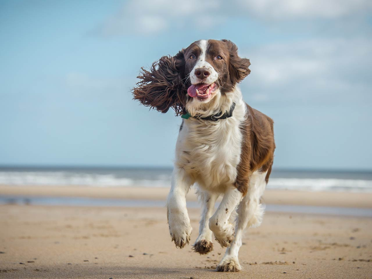 Top 5 dog-friendly staycation locations in the UK