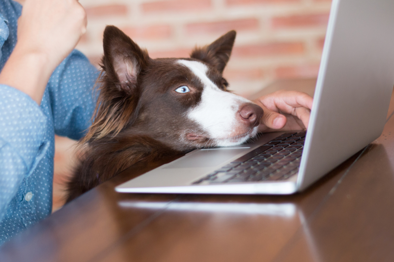 Is a Video Vet as Good as visiting the Clinic? 7 Benefits of using a Video Vet.