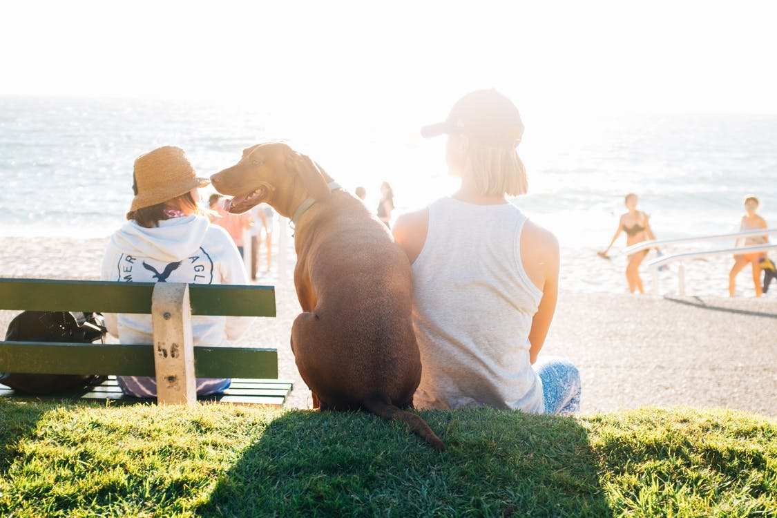 How to protect your dog from the sun in summer?